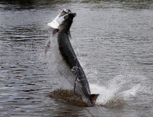 Cano Negro, Rio Frio, Lake Nicaragua and San Juan River Fishing
